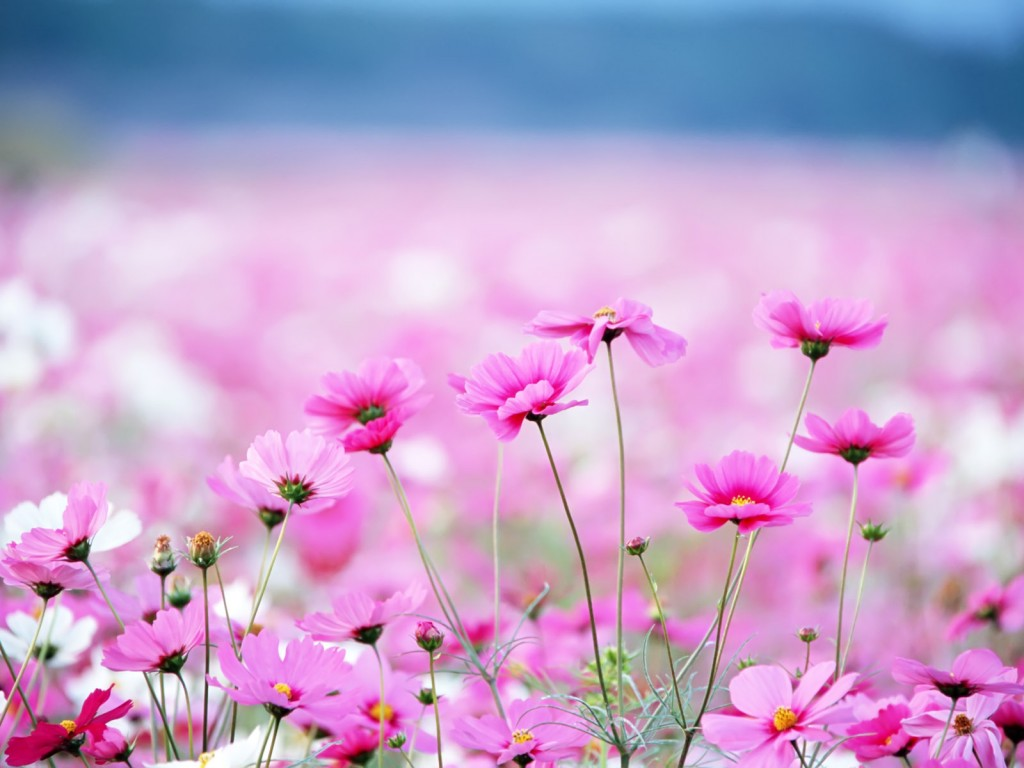 kvety-2
