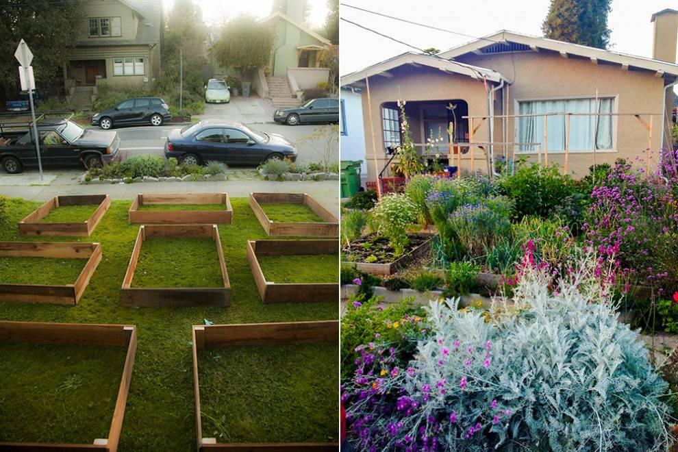 01-lawn-garden-transformation