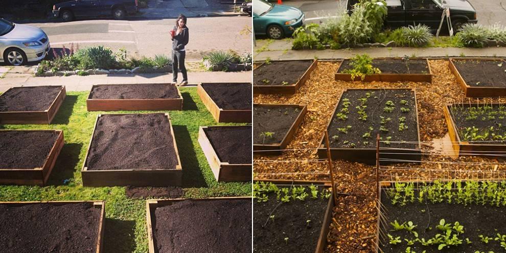 02-lawn-garden-transformation