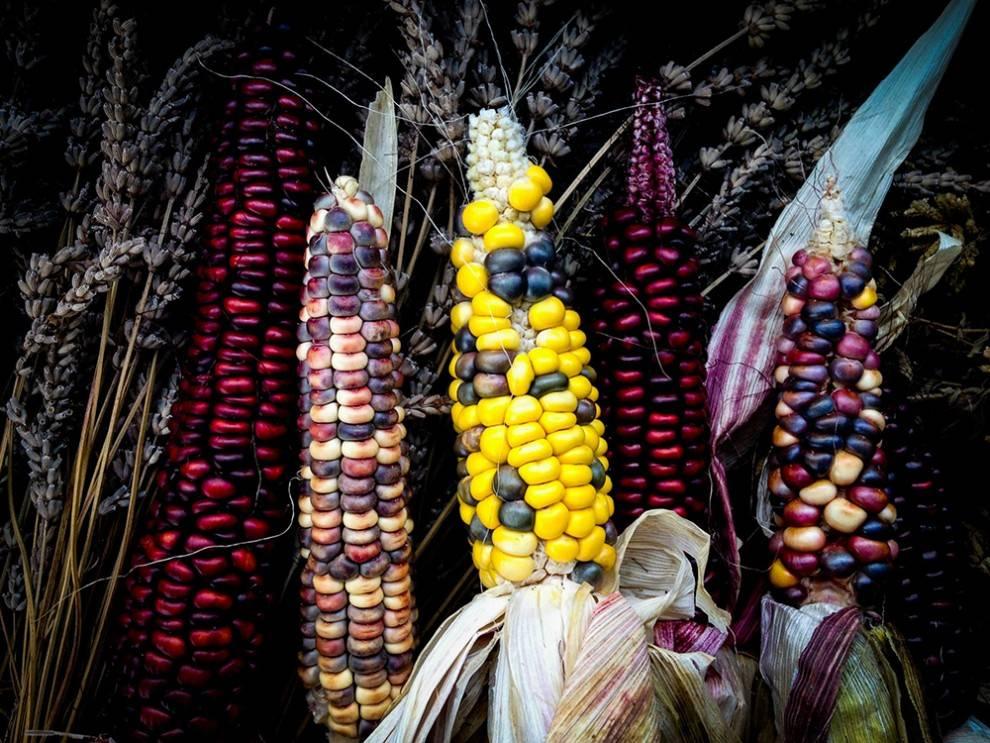 07-painted-corn