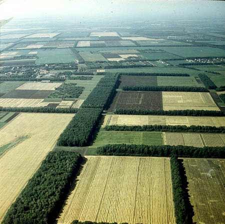blacksoil