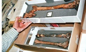 londoni-loodusmuuseumi-varakambris-leidub-ka-neandertallase-luid-nende-72810783