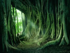 Ficus_udush1