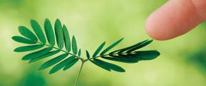MAC35_PLANTS02