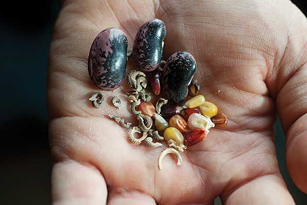 seeds_in_hand