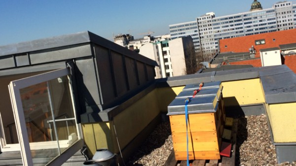 Stadt-Bienen-Nektar-Honig-Stock-Dach-City-Berlin-Mercure-Checkpoint-Charlie-Maerz-2014-2-600x337