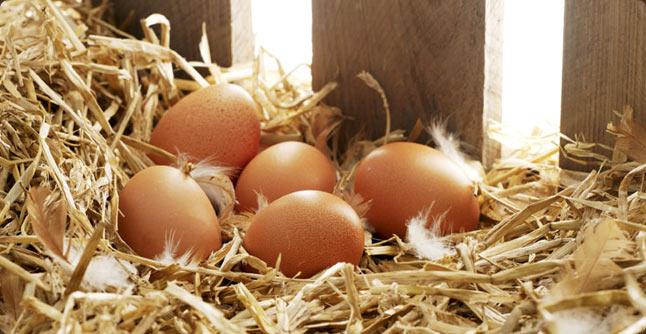 chapel_farm_eggs_home