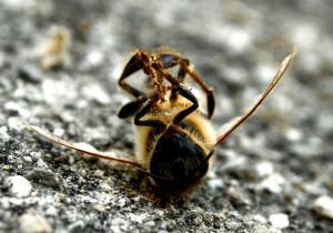 dead-bee630