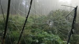 hämähäkinverkko%20luonto%20metsä%20sade%20syksy%20luontokuvaus%20kaste%20aamukaste