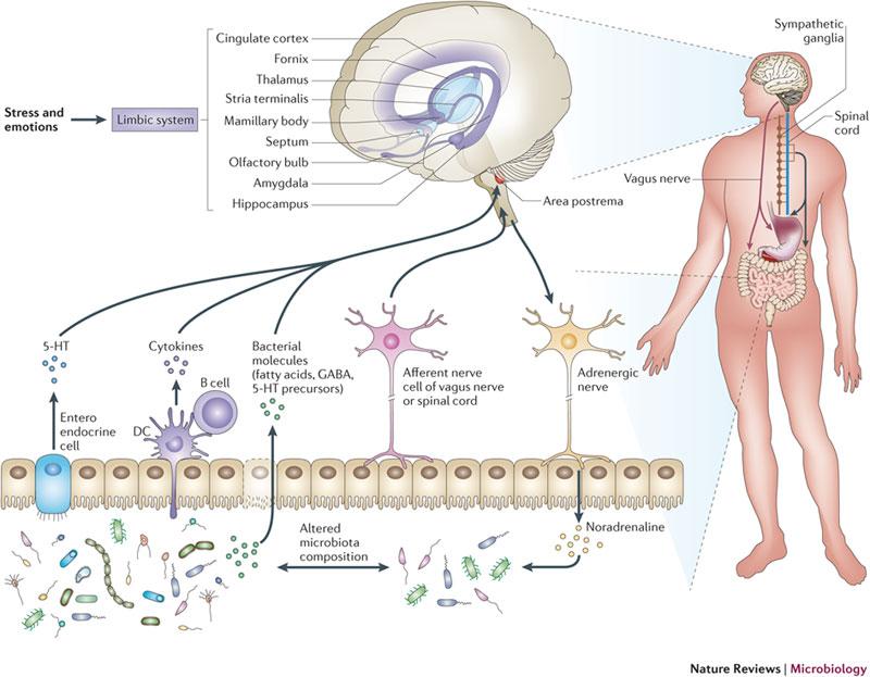 NRM-Gut-brain-picture-2