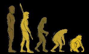 reverse_evolution2
