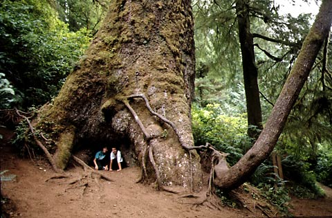 douglas_tree_sanctuary