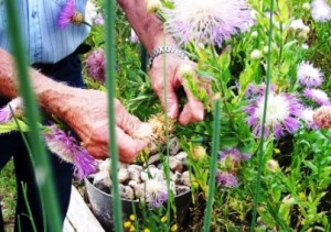 elderly_gardening_touch