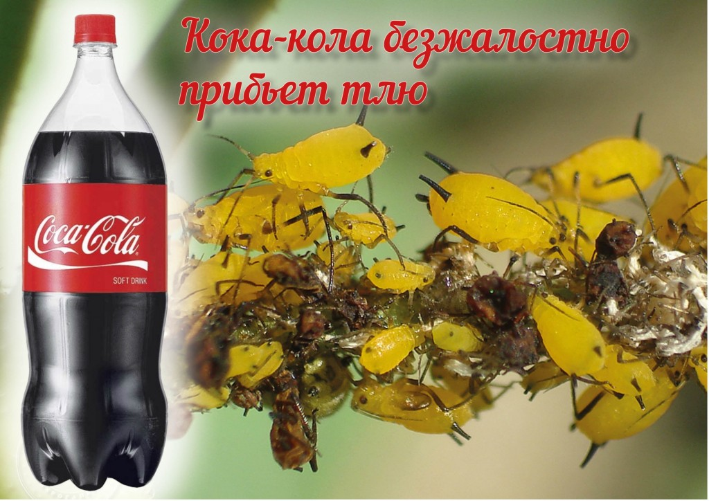 koka_kola-protiv-tli_-tlya