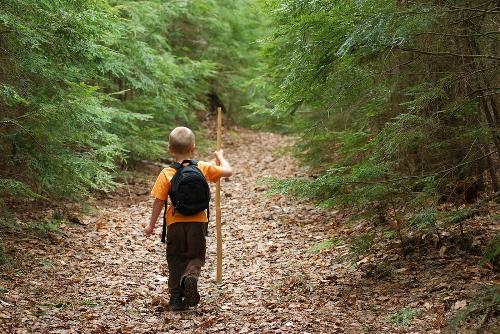 child_in_woods