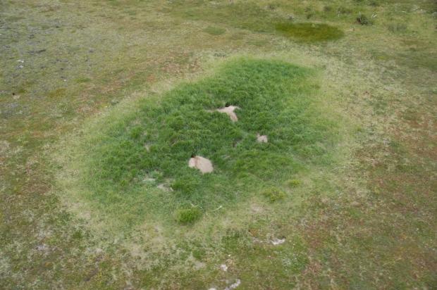 arctic-fox-garden-den