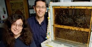 May Berenbaum & Gene Robinson, professors of entomology.