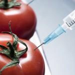 GMO - nebezpečná nekontrolovaná hra s génmi