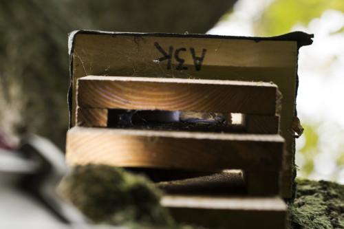 Ploughman-Wood-Soprano-pipistrelle-in-Kent-box-A3K-17-10-16-e1445106183707
