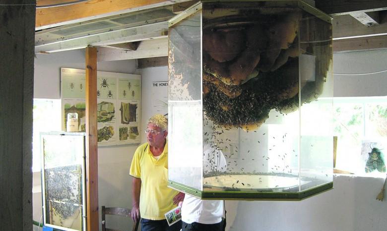 Dedko vyrobil pre vnuka sklenený úľ, aby ho odpútal od počítačových hier - OZ Biosféra