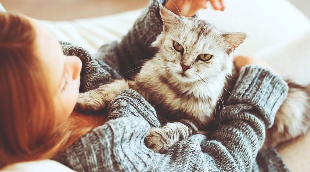 felinoterapiya-lechenie-koshkami