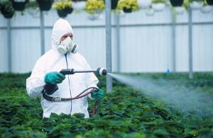 uchenye-vyyasnili-chto-pesticidy-provociruyut-rannee-polovoe-sozrevanie_1