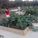 V Maďarských mestách sa rozvíjajú kolektívne záhrady