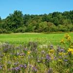 Rastliny začali rýchlejšie pohlcovať oxid uhličitý