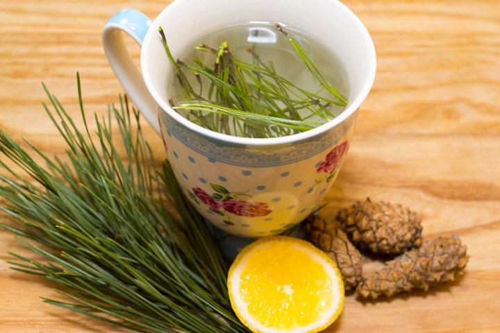Make-Pine-Needle-Tea-Final