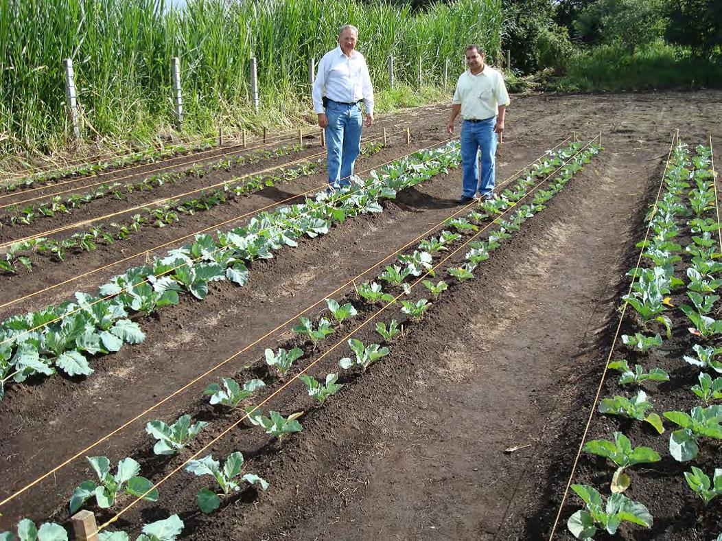 Mittleiderova metóda úzkych záhonov pre pestovanie zeleniny 1/3 - OZ  Biosféra