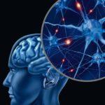 Neustály rozvoj mozgu pomáha zachovávať mladosť