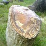 Živé kamene – Trovanty