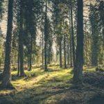 Význam lesa