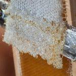Výnimočné liečivé vlastnosti včelích viečkovancov