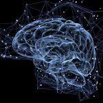 Mozog človeka dokáže predvídať budúcnosť