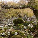Stromy, ktoré sa živia kamením