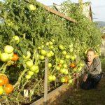 Ako získať úrodnú pôdu