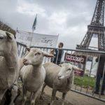Prečo francúzski roľníci dobrovoľne odchádzajú zo života