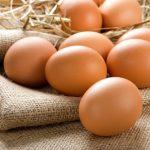 Konzervácia vajec