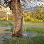 Strom - fontána v Čiernej Hore