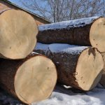 O rezonančnom dreve ajeho akustických vlastnostiach