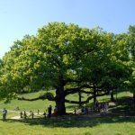 Stromy vživote našich predkov