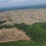 Odlesňovanie môže spôsobiť smrtiace epidémie