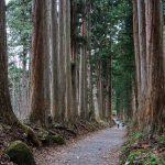400 ročná cédrová alej vJaponsku je najdlhšia na svete
