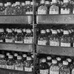 Ako v obliehanom Leningrade zachránili unikátnu svetovú zbierku semien akademika Nikolaja Vavilova