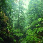 Les je dôležitý spojovací článok vkolobehu vody