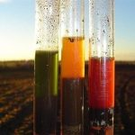 Ako rýchlo určiť kyslosť pôdy vdomácich podmienkach