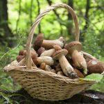 Konzumácia húb znižuje riziko vzniku rakoviny prostaty