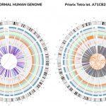 Genetické sekvenovanie bežnej vakcíny odhaľuje kompletný individuálny genóm potrateného dieťaťa... 560 génov spojených srakovinou