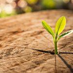 Rastliny môžu byť inteligentnejšie, ako sme si mysleli